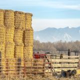 Clear Square Blocks of hay piled inside a fenced area on a farm in Eagle Mountain Utah. A scenic background of mountain and sky can be seen on this sunny stock images