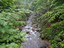 The clear stream. Not famous small streams, trees, boulders, clear water, the rain is full of vigour, brilliant green flowers, grass, gurgling streams, the Stock Photography