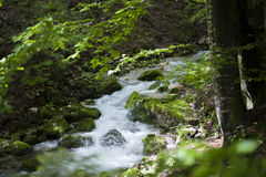 Clear stream. Flowing trough green forest Stock Images