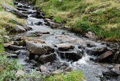 Clear stream in green grass. Royalty Free Stock Images