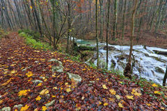 Clear stream and November foliage in the mountains Royalty Free Stock Photos