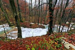 Clear stream and November foliage in the mountains Royalty Free Stock Image