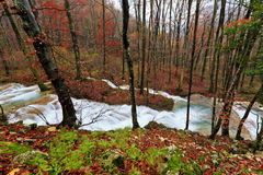 Clear stream and November foliage in the mountains Royalty Free Stock Images