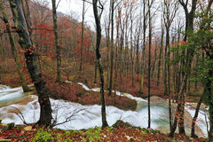 Clear stream and November foliage in the mountains Royalty Free Stock Photo