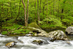 Clear stream in remote forest. Stock Image
