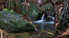 Clear stream in Vallee de Mai Nature Reserve. In Praslin. Seychelles stock footage