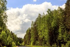 A clear, sunny day. Summer. Forest all green and blue sky Stock Photography
