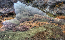 Clear tidal pool with sea life Stock Photography