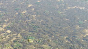 Clear & transparent Repulse Bay ripple,Seaweed,algae,Sparkling lake,gravel. stock footage