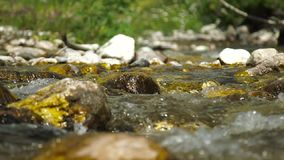 Clear Transparent Water Flows in the Mountain Small River stock video