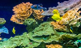 Tropical colour fish and coral reef royalty free stock photos