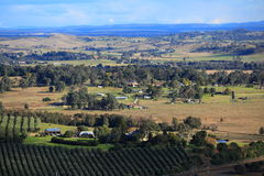 Panoramic view Australian landscape with olive grove Stock Photo