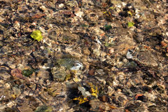 Clear water. In a shallow river. Through the water are visible stones and yellow leaves Stock Image