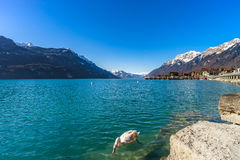 Clear water in Brienz lake, winter day Royalty Free Stock Image