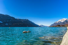 Clear water in Brienz lake, winter day Stock Photo