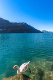 Clear water in Brienz lake, winter day Stock Image