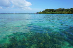 Clear water with corals below sea surface Royalty Free Stock Images