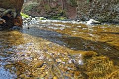 Clear water. Crystal clear spring water in the woods in Bushkill Pennsylvania Royalty Free Stock Photos