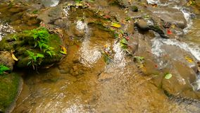 Clear water flows down cascades of waterall rapids in tropical rainforest. Crystal clear water flows down a lov cascade of waterall rapids in a tropical stock video footage