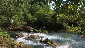 Clear Water Flows among the Mangrove Roots stock footage