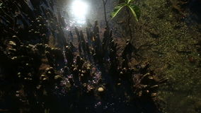 Clear Water Flows among the Mangrove Roots stock video footage