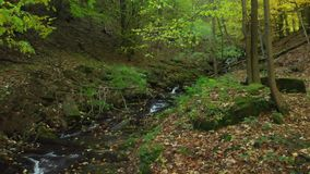 Clear water flows in a mountain stream in the fall. Carpathian mountains. Crystal mountain stream. Carpathian mountains. Ukraine. Clear water flows in a mountain stock video footage