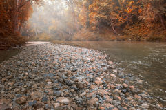 Clear water Forest Pebble Stones Rocky River Stock Image