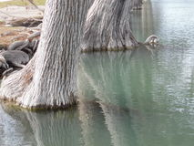 Clear water Guadalupe River Royalty Free Stock Photos