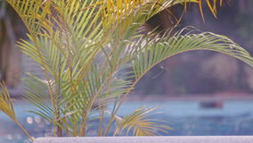 Clear water in jacuzzi and green palm leaves on foreground. Clear blue warm water in jacuzzi and green palm tree leaves on swimming pool foreground on sunny day stock footage