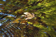 Clear water with leaf Stock Photo