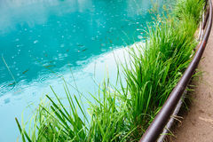 Clear water of Plitvice Lakes, Croatia Royalty Free Stock Photos