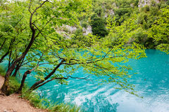 Clear water of Plitvice Lakes, Croatia Royalty Free Stock Photography