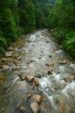 Clear water river in forest Stock Photos