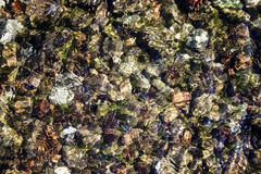 Clear water in the river over the texture of rock. Stock Photos