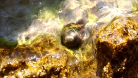 Clear water, rocks from the shore and snail. Moving stock video footage