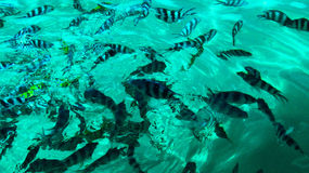 Clear Water. Seeing the fish through Royalty Free Stock Image