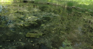 The clear water from a spring and the trail 4K FS700 Odyssey 7Q. The clear water from a spring with wooden trails that serves as bridge 4K FS700 Odyssey 7Q stock video