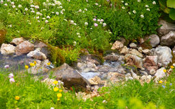Clear Water Stream in mountains on green valley with flowers Royalty Free Stock Photo