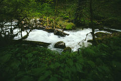 Clear Water Stream river in forest Landscape Royalty Free Stock Photo
