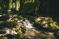 Clear Water Stream river in forest Landscape Royalty Free Stock Images