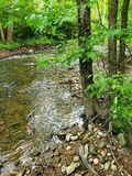 A clear water stream in a wooden area. A clear water stream in a  area, park, environmental, river, source stock photos