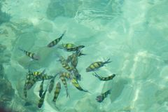 Clear water to see fish Stock Photography
