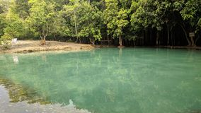 Clear water. And the tree Royalty Free Stock Photos