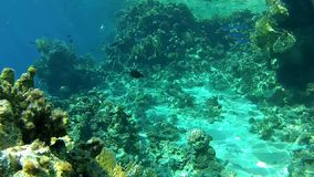 Clear water in Tropical sea The corals and fish. stock footage