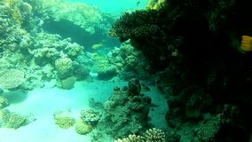 Clear water in Tropical sea. Red sea Underwater life fish on the bottom. The corals and the caves. Corals. Fish and clear water. Tropical sea stock footage