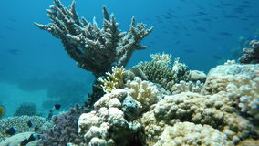 Clear water. Underwater adventure. stock video