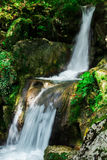 Clear waterfall in green forest, beautiful nature landscape Stock Photos