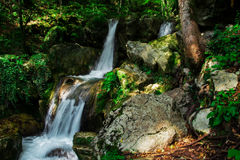 Clear waterfall in green forest, beautiful nature landscape Stock Images