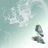 Clear waters background with two tropical  fishes Royalty Free Stock Photos