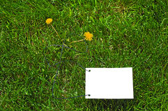 Clear white paper on grass. Clear white paper on green grass for text writing. Two yellow flowers there Stock Photo